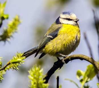 Plants that Attract Songbirds